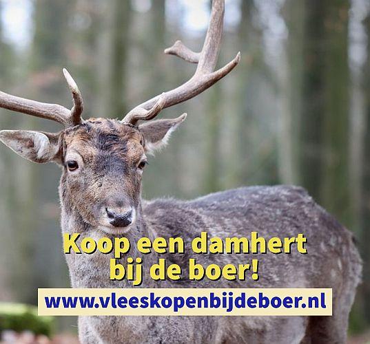 Koop een damhert direct bij de boer - koopeendamhert.nl - www.vleeskopenbijdeboer.nl