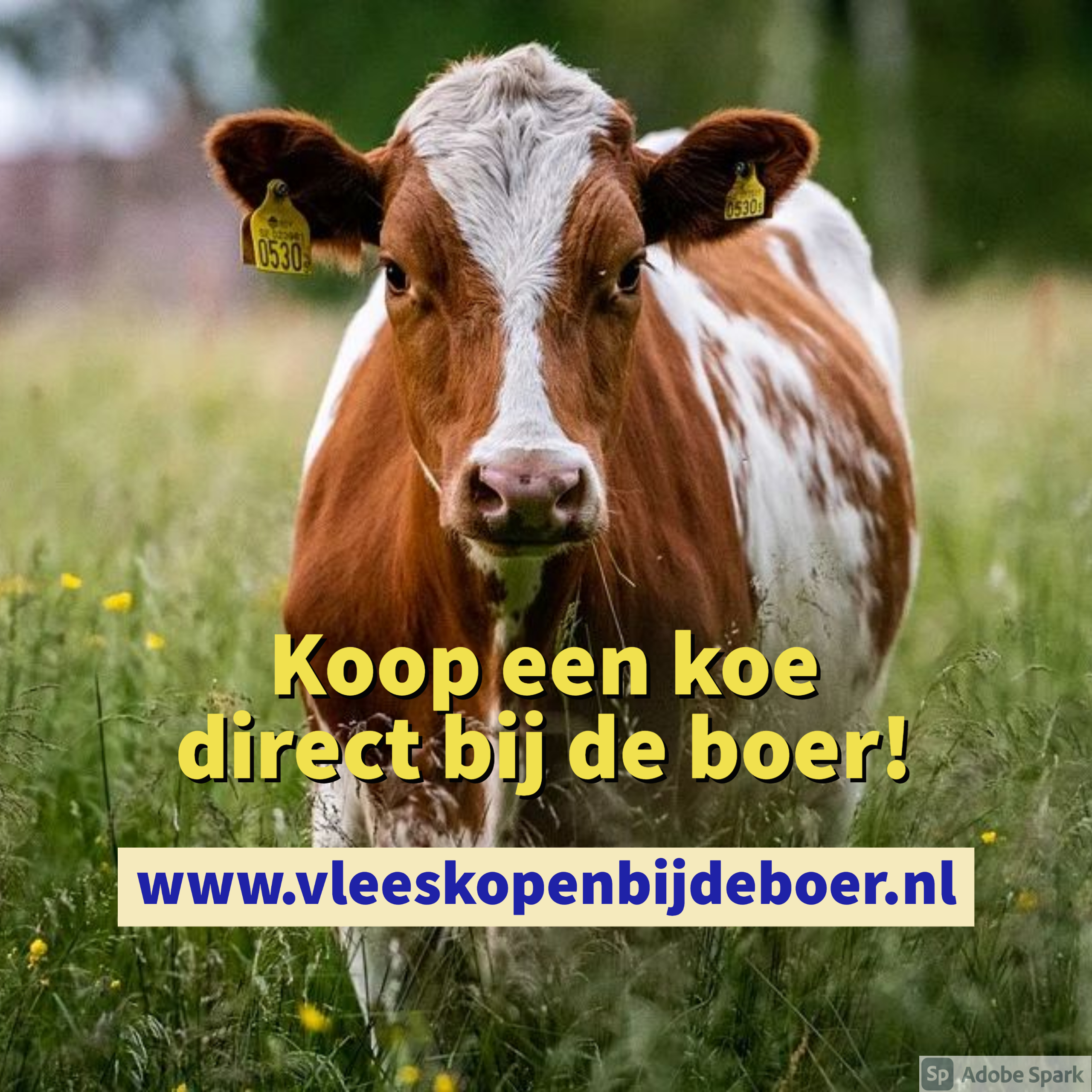 Koop een koe direct bij de boer - koopeenkoe.nl - www.vleeskopenbijdeboer.nl