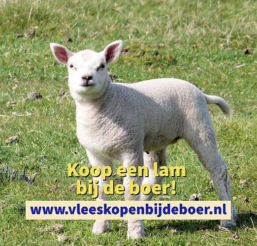Koop een lam direct bij de boer - koopeenlam.nl - www.vleeskopenbijdeboer.nl