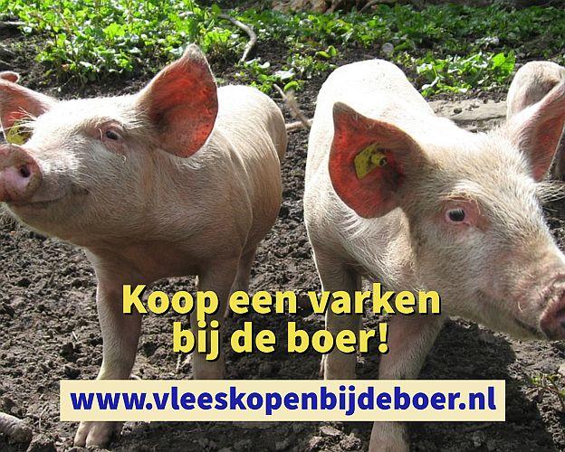 Koop een varken direct bij de boer - koopeenkoe.nl - www.vleeskopenbijdeboer.nl