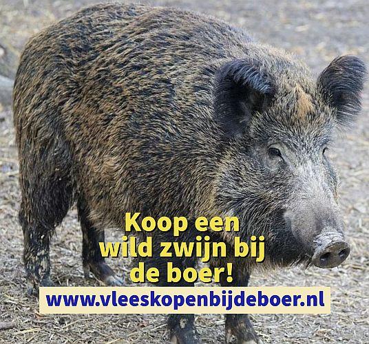 Koop een wild zwijn direct bij de boer - koopeenwildzwijn.nl - www.vleeskopenbijdeboer.nl