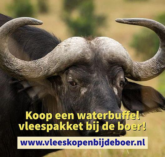Koop een waterbuffel direct bij de boer - watebuffelvlees pakket - koopeenwaterbuffel.nl - www.vleeskopenbijdeboer.nl