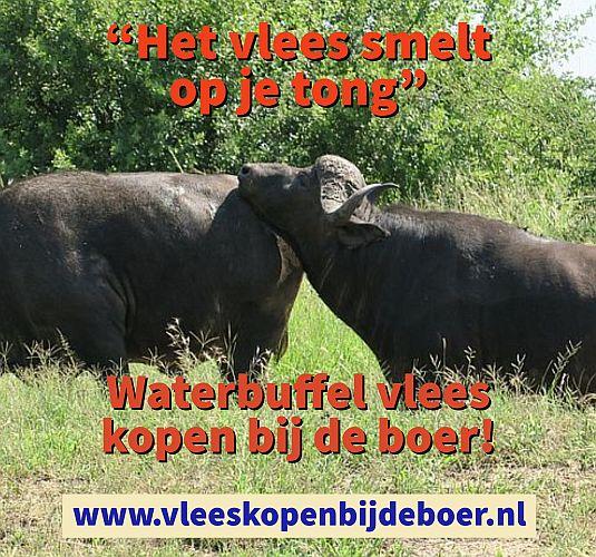Waterbuffelvlees kopen bij de boer - waterbuffelvlees pakket - waterbuffel kopen - www.Vleeskopenbijdeboer.nl
